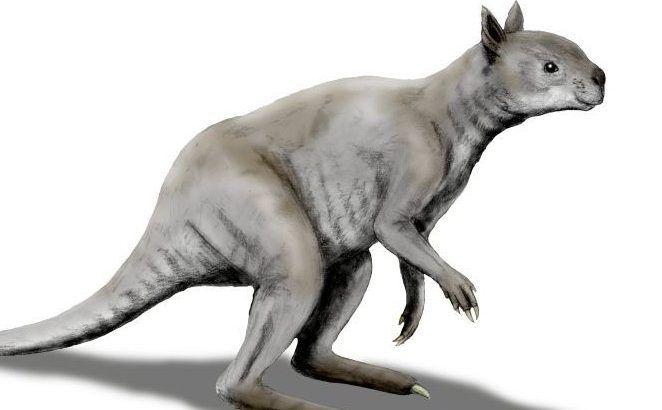 fakta hewan kanguru purba